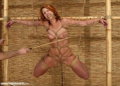 madison ivy hogtied